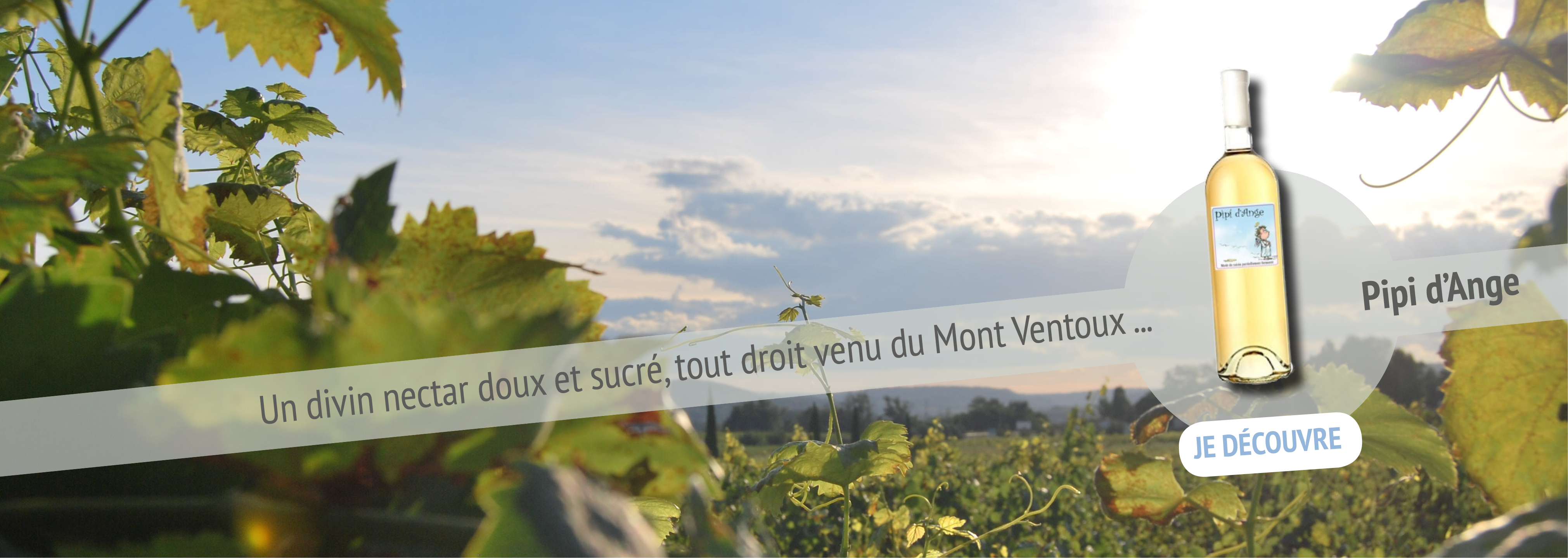 Pipi d'Ange - La Ferme Saint Pierre Ventoux